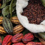 benefits-of-cacao
